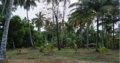 Land For Sale In Kandana