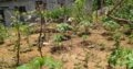 Land For Sale Kosgama