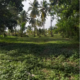 Land For Sale In Tangalle