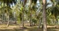 Land for Sale in Katupotha