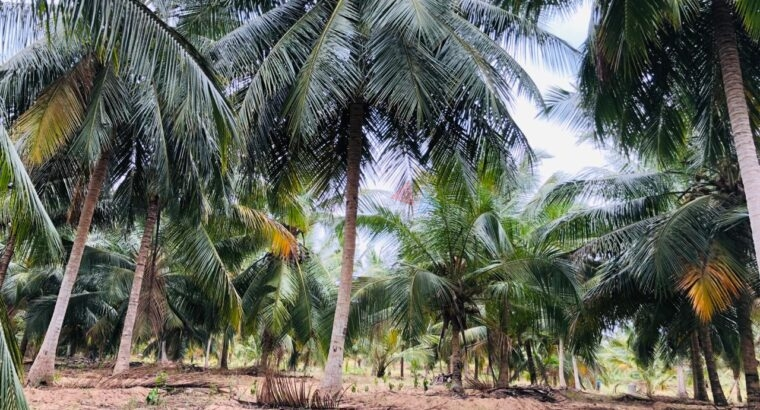 Land For Sale in Boraluwewa