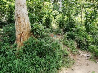 Land For Sale In Naththarampotha