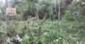 Land For Sale In Gampaha Kalagedihena