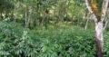 Land For Sale In Eheliyagoda