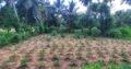 Land For Sale In Wariyapola