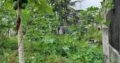 Land For Sale In Weliwita