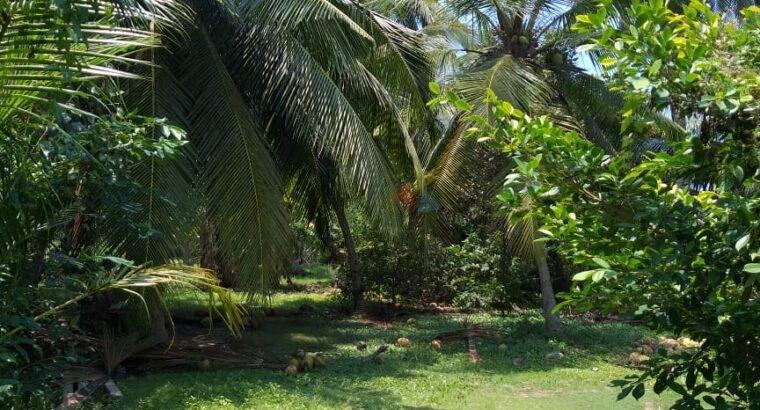 Land For Sale In Pamunugama