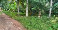 Land For Sale In Thalawathugoda
