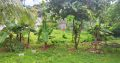 Land For Sale In Nawala